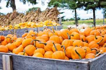 agriculture autumn cropland delicious